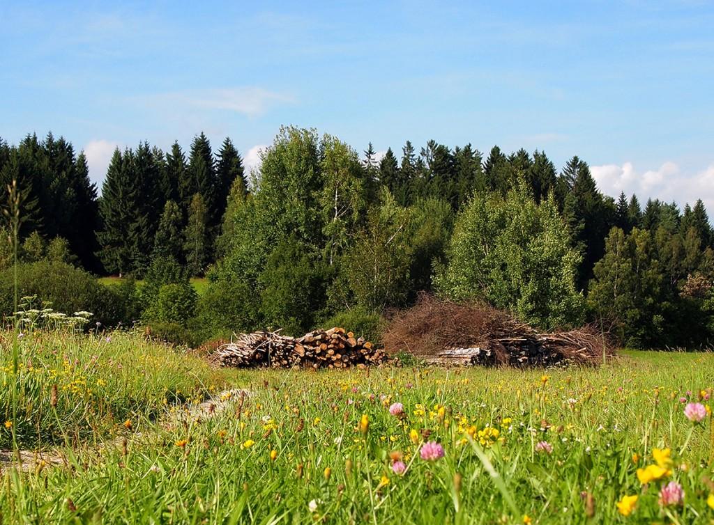 Wald - Reindl Hof